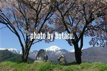 Photo drive ~常念道祖神の桜~