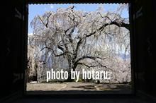 Photo drive ~近所の桜の名所を巡る休日~