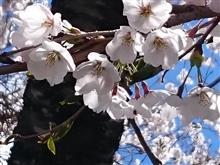 G.W. 1日目 (2017/04/29) 土曜日