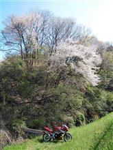 旬の食材と春の渡り