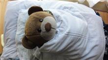 実家に24時間寝たまま寄生熊・・・・