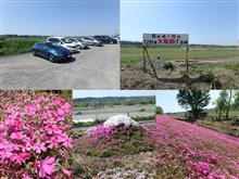 相模川 芝桜