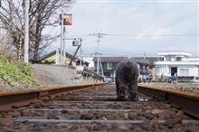 クマーと行く北海道紀行 前夜
