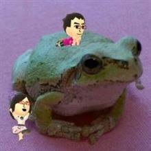 カエル探し    …の巻    平成29年5月7日