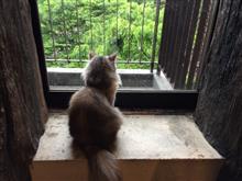 猫カフェ・ミネット