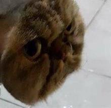 機関車トーマスのように「お面」を着けたようなネコが海外で衝撃を与える!