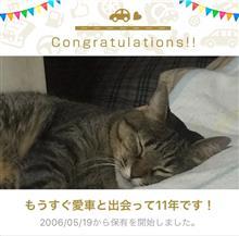 愛猫と出会って11年!