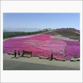 芝桜ドライブ