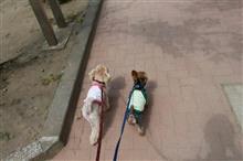 あんず&羊太と散歩