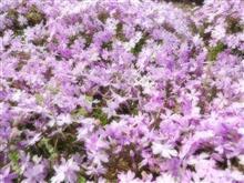 花と雪と湯けむりの群馬 in GW *.。゚+(o'∀'o)+..。*