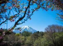 2017 富士芝桜まつり、からの朝霧高原♪