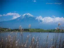 田貫湖、そして天空のチューリップ祭へ