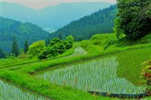 【ビワイチ】棚田リベンジと新緑の「もみじ池」