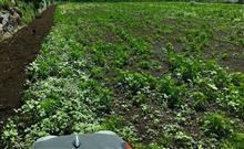 ディズニーシー と 草だらけの畑(南) 耕起