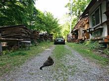猫と森とロードスター