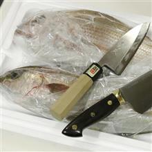 お勧め!魚が激安!千葉市中央卸売市場