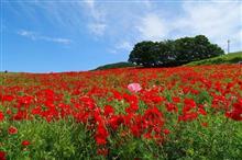 埼玉Touring!真っ赤花ととダム(チチブ編)♪