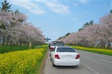 2017GW~桜追いかけ~ グルメ編