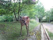 奈良公園ではありませんw