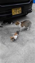 猫にゃあ〜ご
