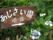 久留米 千光寺 紫陽花撮り2017