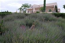 ずっとシチリア16日間 ~ アラゴナの素敵なホテル