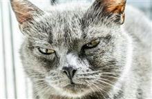 路地裏の猫達の集会(=^ェ^=)