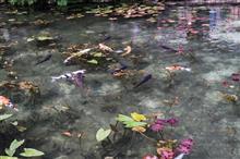 モネの池行ってきました