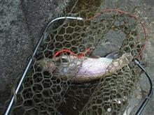 昼からの釣り