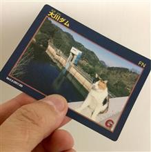 大川ダムの番猫