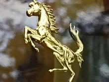 跳ね馬の虐待