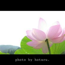 Photo drive ~雨上がりの朝の再会~