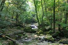滝と深緑... 読書は愉しく...