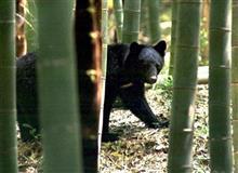 人食い熊~新世代クマの恐怖