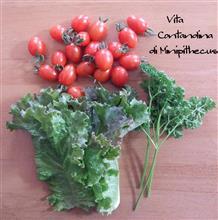 MINI原人の農耕生活 Vita contadina di MINIpithecus stagione 2-9