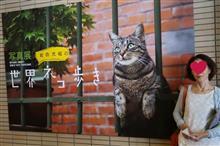 妻のお供で岩合光昭の世界ネコ歩き写真展に行ってきました(^^)