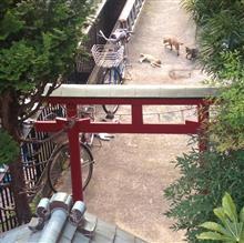 朝猫(2017.7.31/7:00頃)