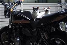 バイク乗りてぇっす(´・ω・`)