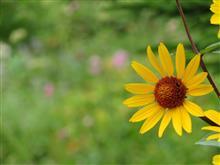 お花とお話をしに♪((´艸`*))アハハ
