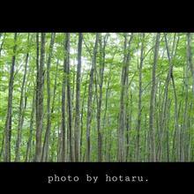 Photo drive ~静寂の朝の空気を切り取る~