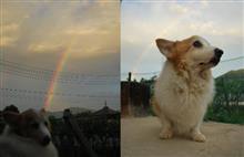 アンジェと虹