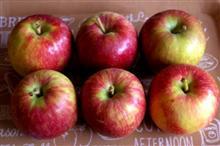 今日のリンゴは「シナノレッド」