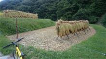 秋の実り~稲刈り🌾始まりました~