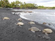 べあきち@夏休み2017・・・アロハ~♪<<第一部・ハワイ島の巻~亀との遭遇と0.6気圧の誘惑>>