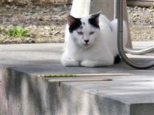 久々に行き会った猫さん