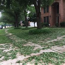 Recovery from hail damage.