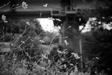 秋口の風景を撮る