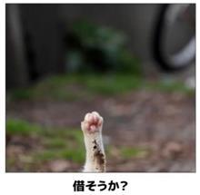 ネコの手も・・・ᗦ↞◃ ᗦ↞◃ ᗦ↞◃ ᗦ↞◃ ฅ(^ω^ฅ) ニャ~