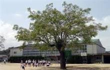 「 学 校 の 木 」 ~