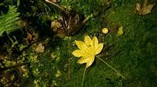秋の行楽、富良野へ